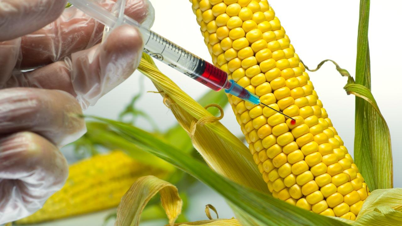 ГМО не вредит здоровью человека, а лишь улучшает качество продуктов. Фото: https://venturesafrica.com