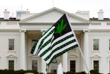 марихуана на инаугурации