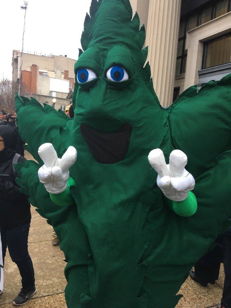 Активисты хотят, чтобы марихуану разрешили во всех штатах США. Фото: salon.com