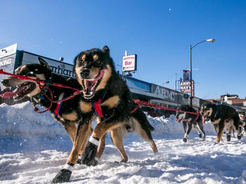 Забег на собачьих упряжках. Фото businessinsider