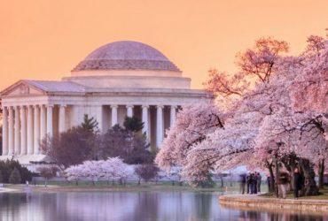 Уникальные вашингтонские вишни скоро расцветут