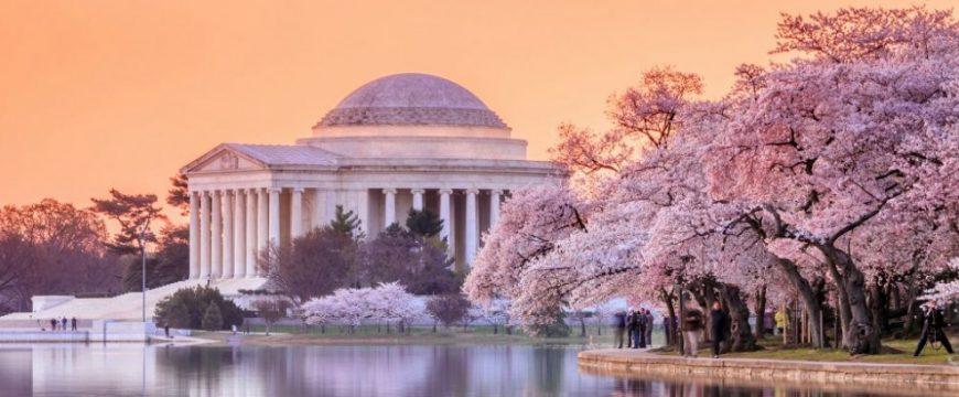 Вашингтонские вишни подарили американцам в начале 20 века. Фото: yeegotravel.com