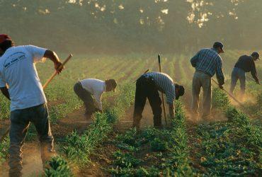 Кем работают иммигранты в США