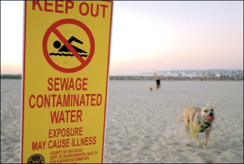 Точно сказать, насколько пострадали пляжи, невозможно. Фото: thankyouocean.org