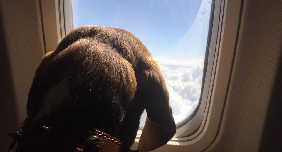 Захватывающая история о перелете с собакой на борту. Фото facebook.com/luna.mudblood