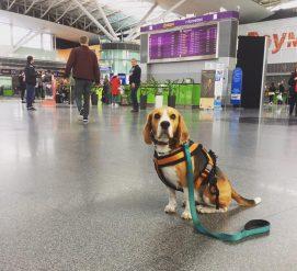 Как правильно перевозить животных в самолете