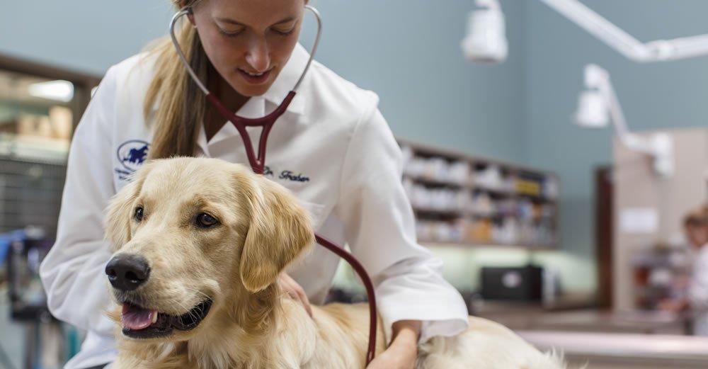 Собак во Флориде поражает старый вирус. Фото: marlborovillagevet.com