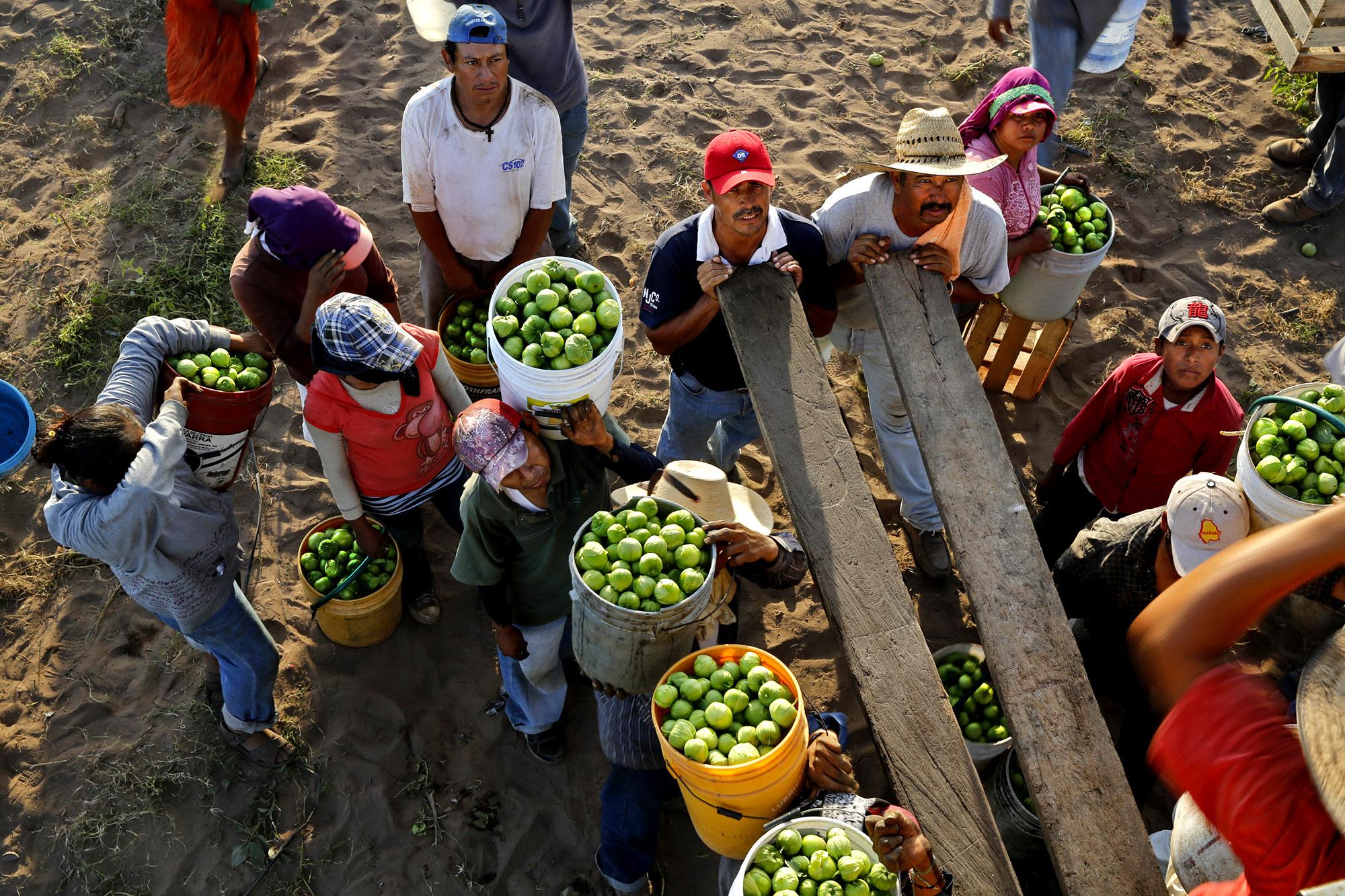 В США достаточно неквалифицированных работников из Латинской Америки. Фото: latimes.com