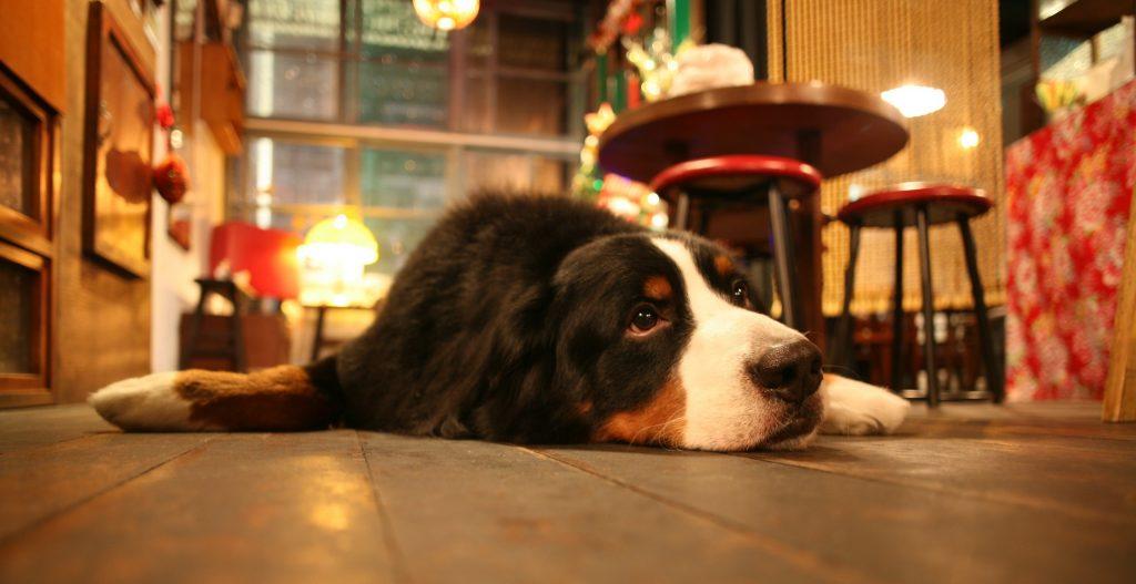 В США весьма сложно снять жилье с собакой. Фото zverivdom.com