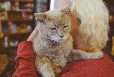 Почетный мэр города на Аляске кот Стаббс умер в 20 лет