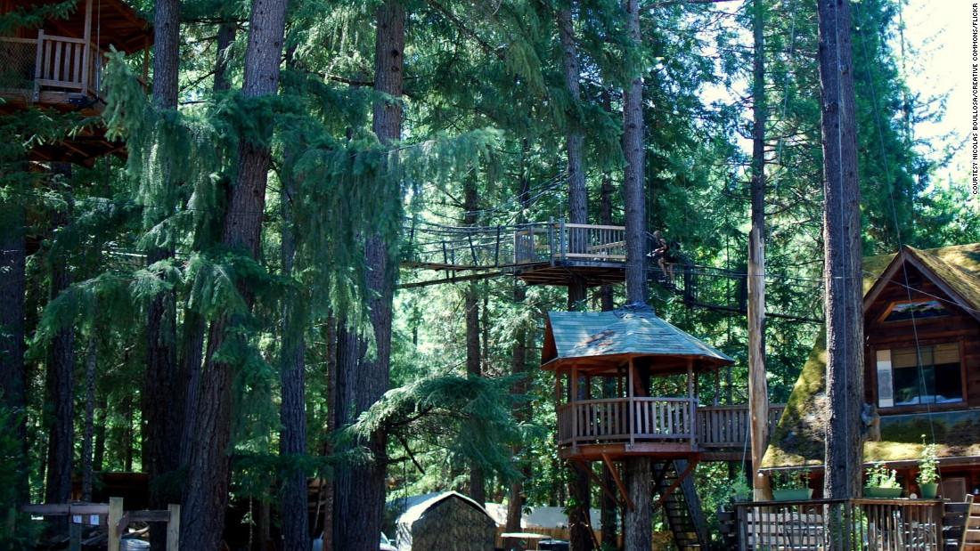 Отель на деревьях в Орегоне. Фото: cnn.com