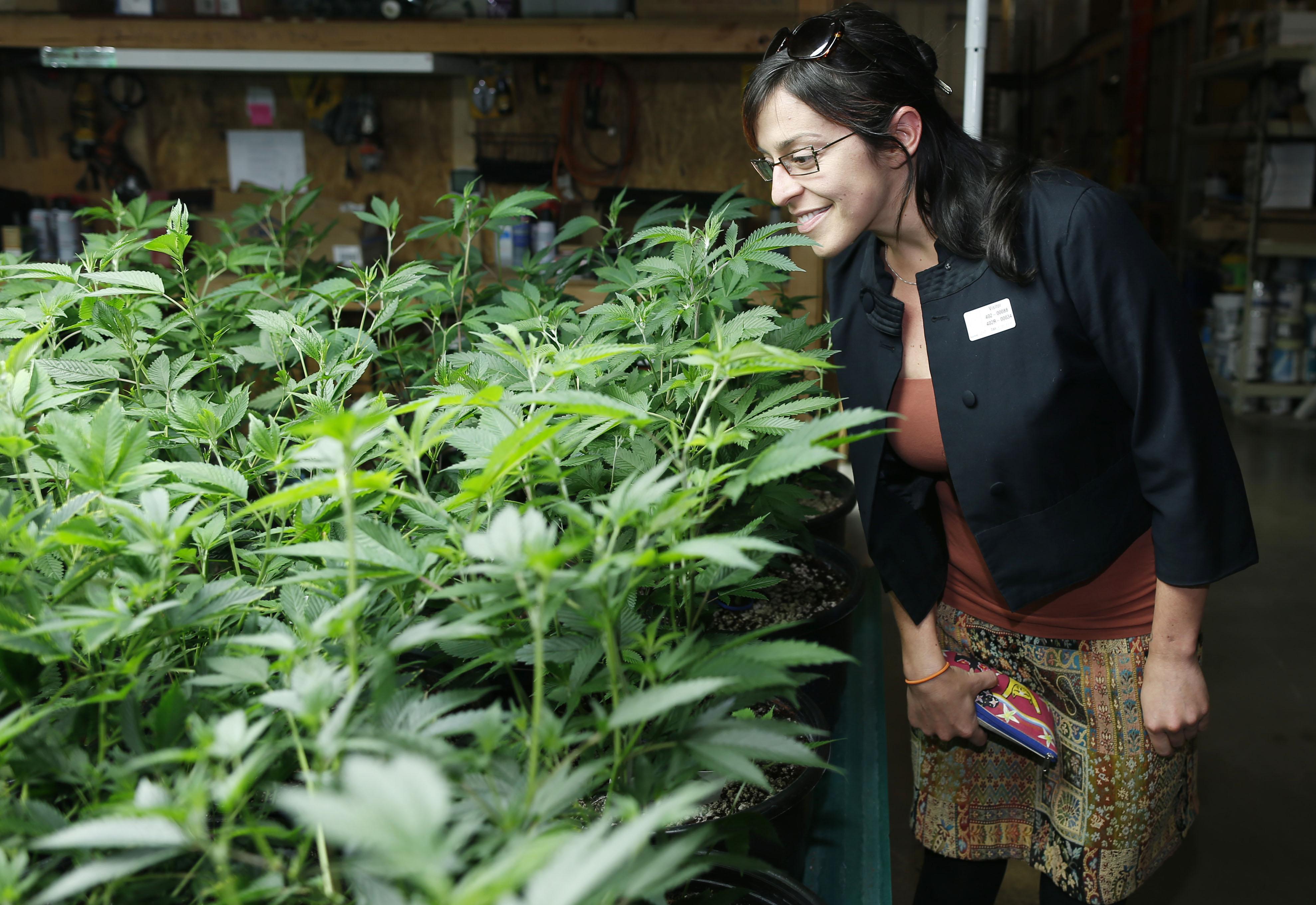 Ребекка Гаска, работающая в сфере наркополитики в Неваде. Фото: heraldtribune.com