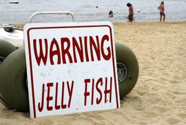 На пляжи Нью-Джерси вернулись смертоносные медузы