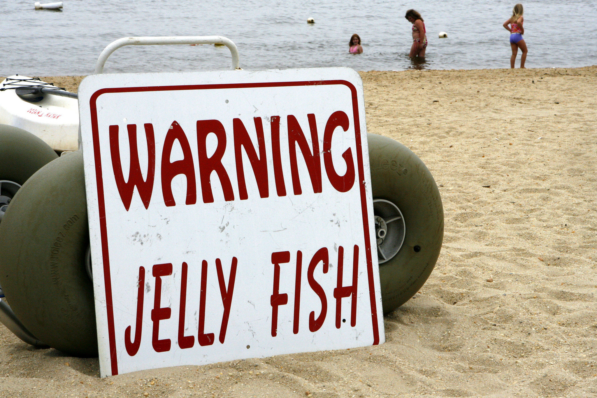 В прошлом году медузы исчезли в сентябре. Фото: lehighvalleylive.com