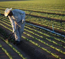 Почему неквалифицированные иммигранты нужны США