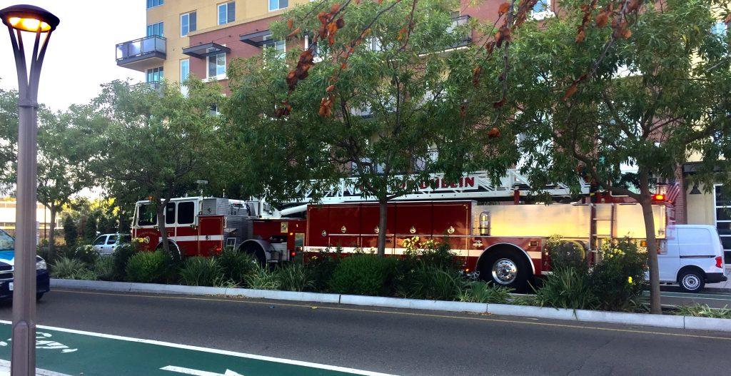 Fire Alarm! или Как проходит эвакуация животных