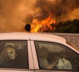 Западное побережье в огне: США настигли «самые крупные пожары в истории»