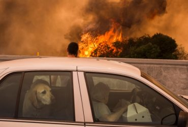 """Западное побережье в огне: США настигли """"самые крупные пожары в истории"""""""