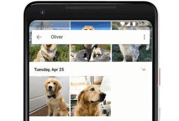 Google научился распознавать на фото имена и породы домашних животных
