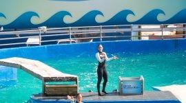 Бесплатный вход в океанариум Майами