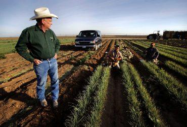 Калифорнийцам не хватает на фермах работников-иммигрантов
