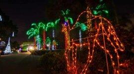Вечер костюмов в зоопарке Майами