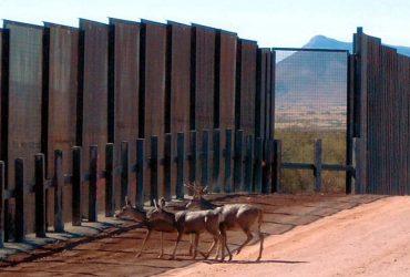 Животные под угрозой вымирания из-за строительства стены на границе