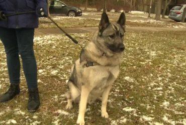 Как собака из Мичигана получила пособие по безработице
