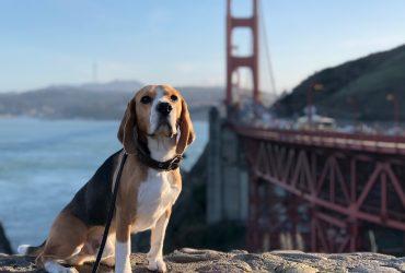 Ветеринария в США. Плановые осмотры и прививки для собаки