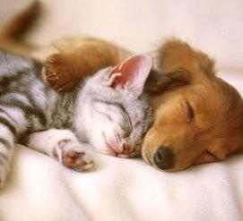 Умные способы сэкономить на уходе за домашними животными