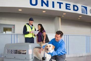 United Airlines запретили перевозить животных в грузовом отсеке самолета