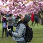 blossom_smell1a-150x150 Home Page