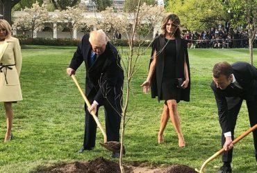 ФОТО: Эммануэль Макрон и Дональд Трамп посадили дуб. Он внезапно исчез