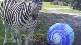 Бесплатный вход в зоопарк Майами на день Земли