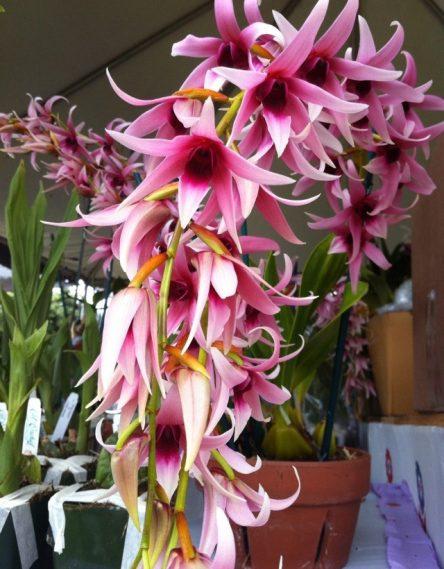 Фестиваль орхидей в парке Фрут & Спайс