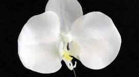 Бесплатная выставка орхидей