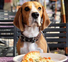 7 фактов, которые должен знать каждый владелец собаки в Америке