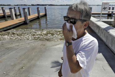 Во Флориде объявили чрезвычайное положение из-за опасных водорослей