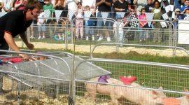Фермерский фестиваль в Квинсе