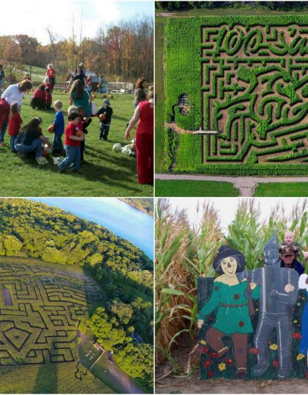 Интерактивный кукурузный лабиринт