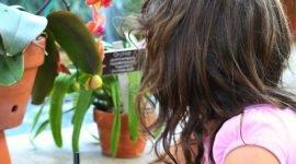 Бесплатная арт-программа для детей в ботаническом саду