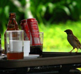 В Миннесоте появились пьяные птицы. Они врезаются в окна и машины