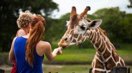 Бесплатный вход в зоопарк