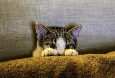 Почему мы считаем кошек психопатами
