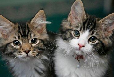 Власти прекратят проводить опыты на котятах, которые тысячами погибали каждый год