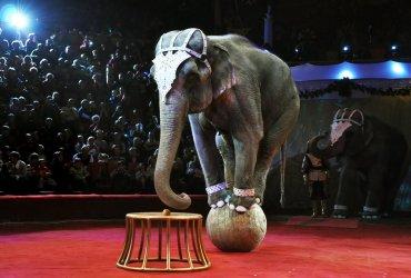 Калифорния запретила продажу новых меховых изделий и выступления диких животных в цирке