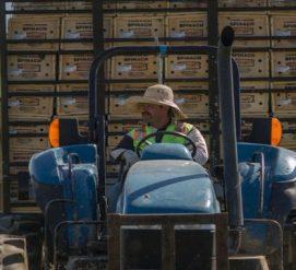 Сельскохозяйственным работникам без статуса могут дать возможность получить грин-карту