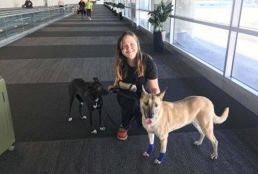 Как бродячие собаки иммигрируют из Украины в Калифорнию