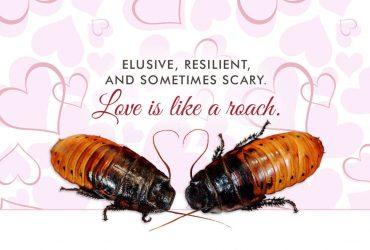 Идея для Дня святого Валентина: назовите таракана из техасского зоопарка именем своего бывшего партнера
