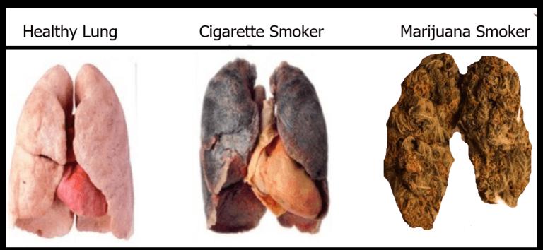 Заставить бросить курить коноплю конопля и фотографий